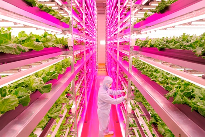 World's Largest Indoor Farm Switches On in Japan