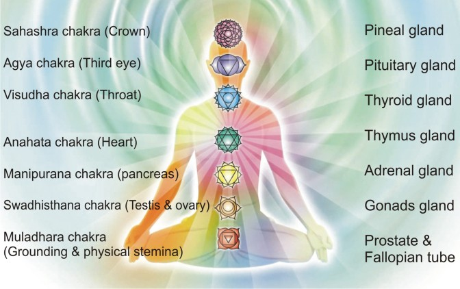 The Chakras-The Seven Centers of Consciousness