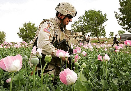 Afghanistan: Still Top Opium Producer, User