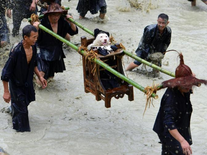 Dog Carrying Day: Chinese village celebrates annual tradition by dressing animal in clothes and parading on wooden throne