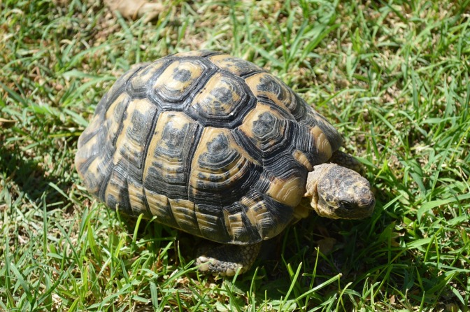 Mystery: 264 turtles are invading the streets of Prague