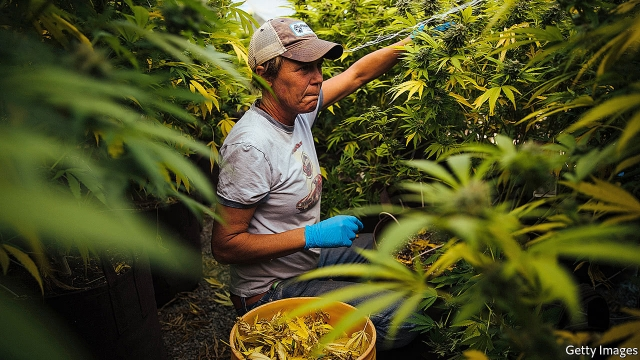 Marijuana businesses, excluded from finance, face unusual risks