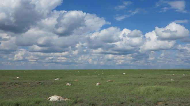 Mystery deepens over mass die-off of antelopes