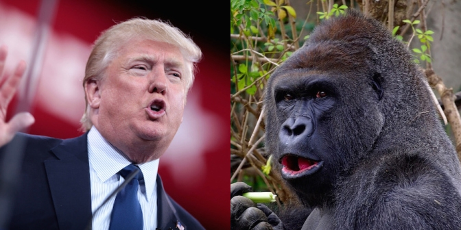People are falling for a made-up excerpt from the bombshell Trump book that involves him watching 'the gorilla channel'